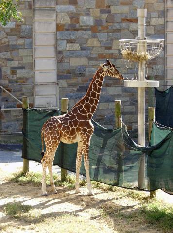 D.C. Zoo
